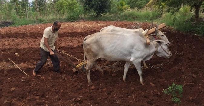 Kishore farming